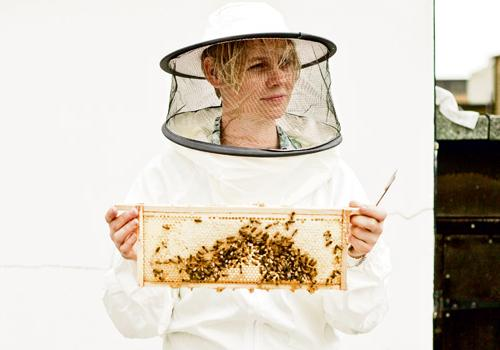 Bees Honey
