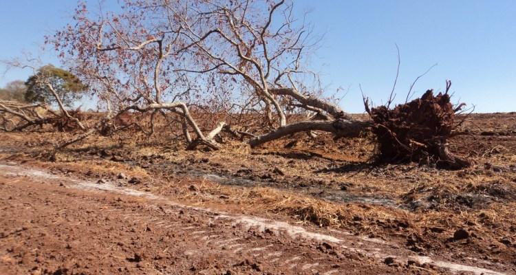 Resultado de imagem para desmatamento do cerrado